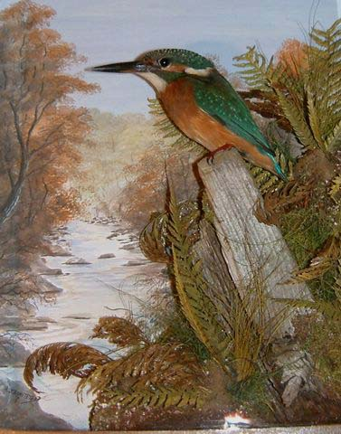 Kingfisher Autumn[1] [640x480].JPG
